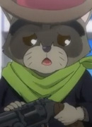 Raccoon Megalo